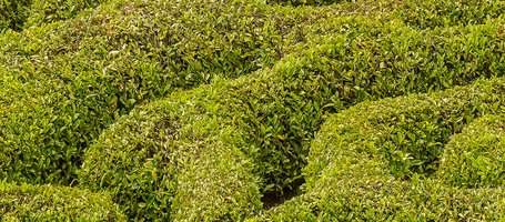 Topiary Art: How to Prune Hedges with Creativity