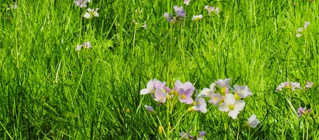 How to eliminate weeds naturally without herbicide