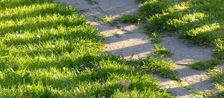 Basic guide to cutting lawn edges