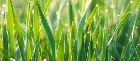 How and When to Water the Lawn in Summer