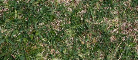 How to reseed damaged lawns