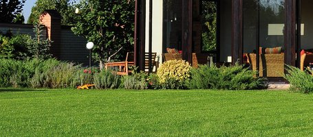 Lawn diseases: prevention is better than cure